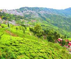 Honeymoon Tour To Sikkim