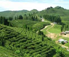 Sikkim Vacation Package